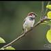 Garden Birds-5.jpg