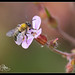 Bee Photos-9.jpg