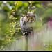 Squirrel-11.jpg