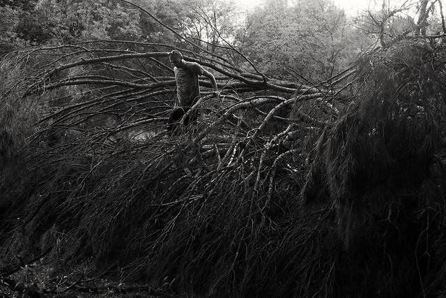 L'arbre tombé