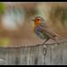 Garden Birds-6.jpg