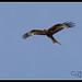 Garden Birds-7.jpg