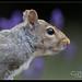 Squirrel-8.jpg