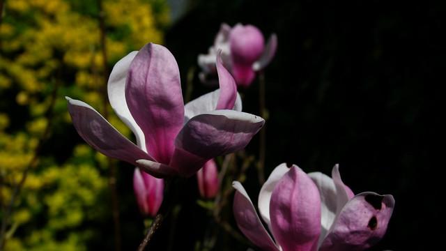magnolia - anniversaire pas banal!