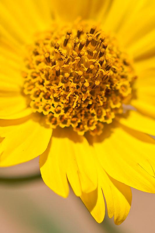 Wild-Flower-6-7D1-062820