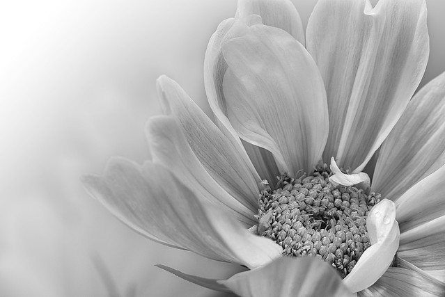 200627 - 003 Monochrome Petals