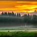 Rådjur i soluppgången