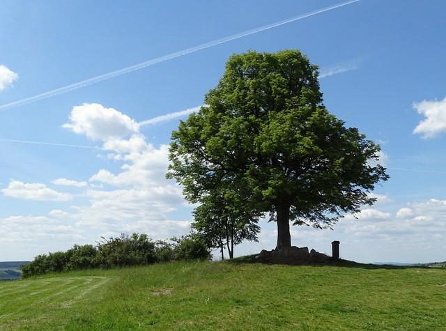 Am Baum des Lebens wachsen viele Augenblicke💕