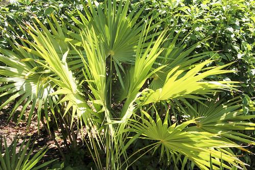 Palms, Valentin Imperial Riviera Maya, Mexico