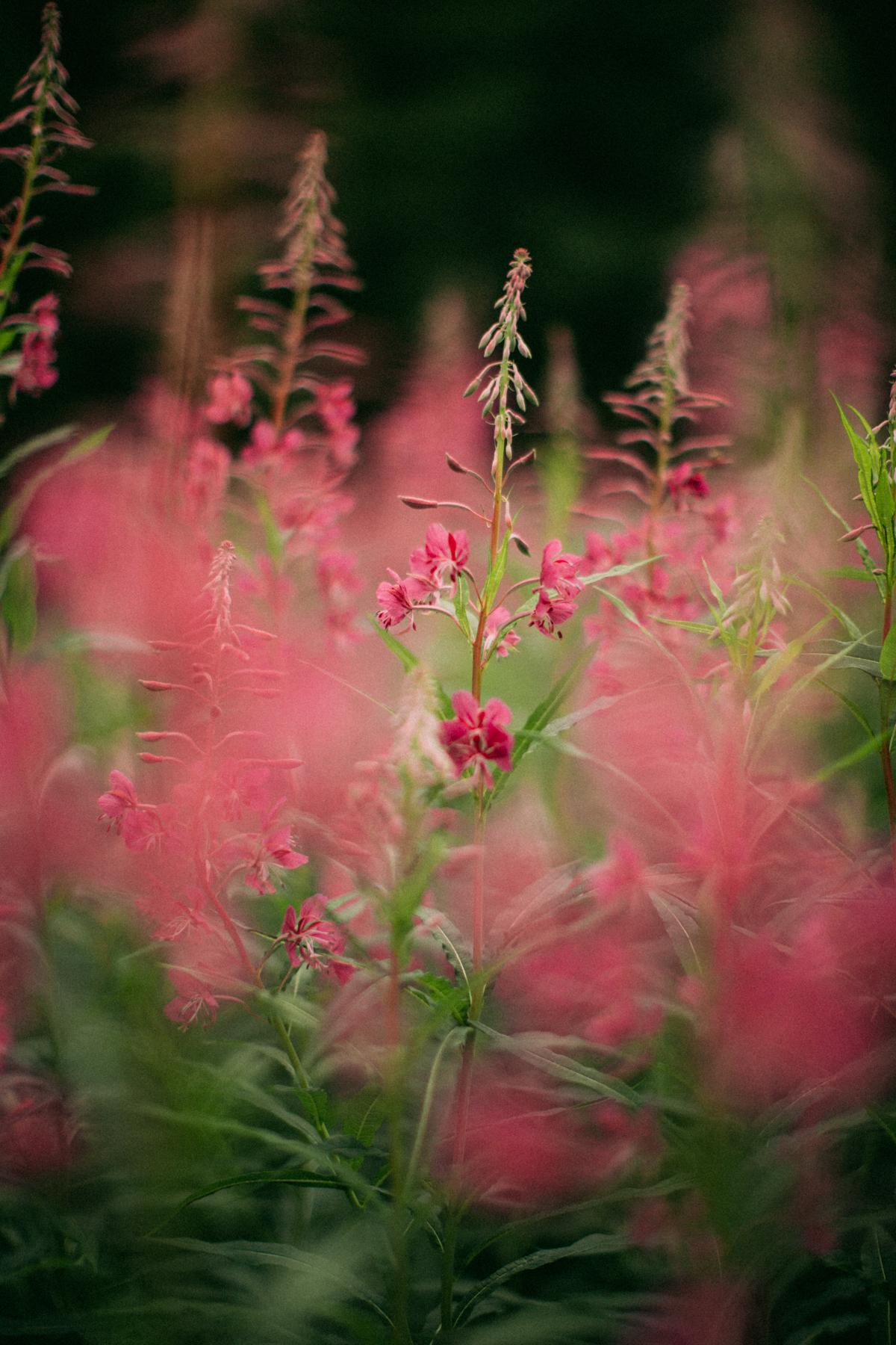 flowercrown-55