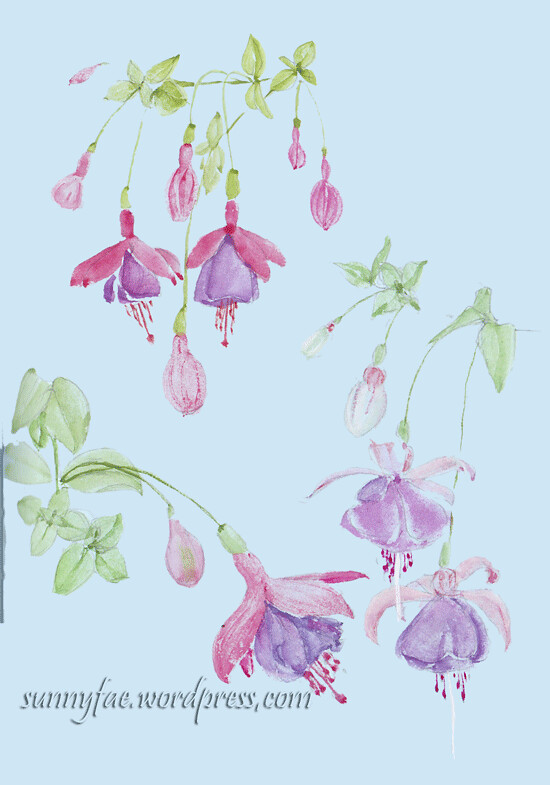 watercolour fuchsia sketch