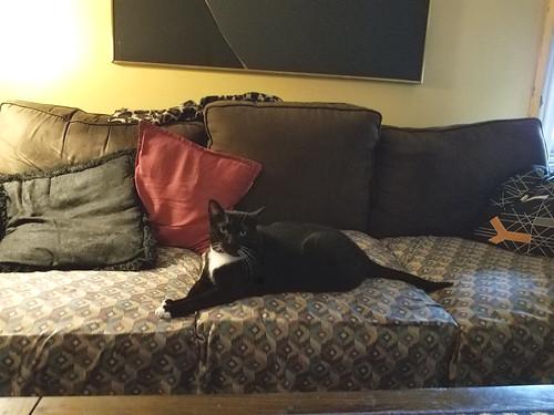 Kitka lounging at home