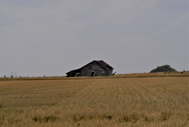 Barn in Wheat Field (Explored 6/29/20 #328)