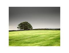 Meadow Rain  and Tree  (由  gerainte1
