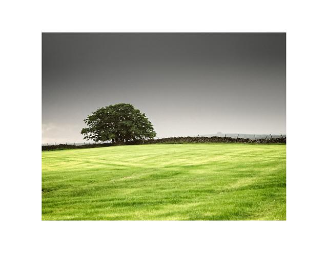 Meadow Rain  and Tree