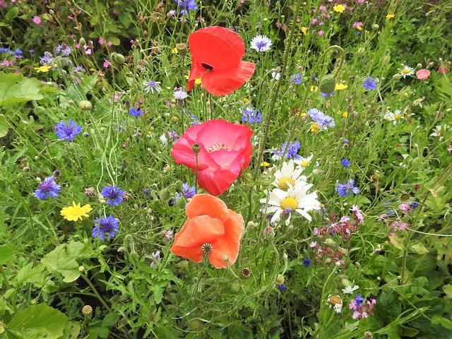 This year's wildflower garden