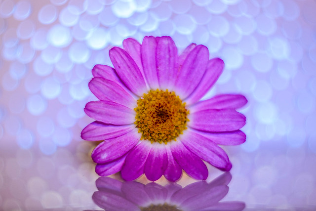 Pink Flower -4466-2