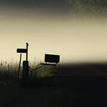 Morning fog with mailbox and bird in Aitkin, Minnesota