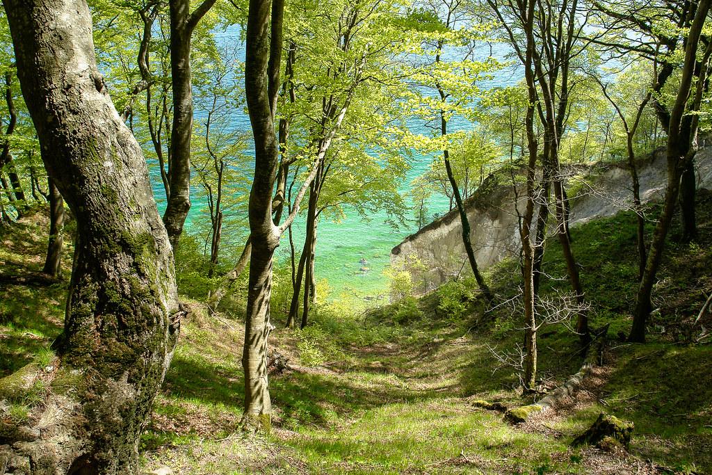Königsstuhl - Wilder Wald am Meer