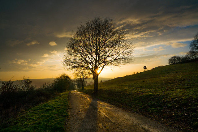 A sky, a sunset and a lonely tree somewhere between eifel  & hochwald