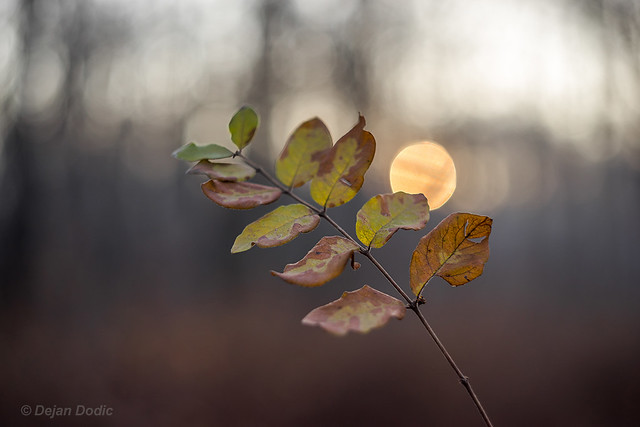 Decaying leaves in the cold morning