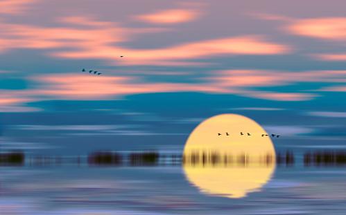 seascape sun sunset mood atmosphere surreal birds flight flying waves sea lake river reflection fantasy trees moving flowing glowing glowingandflowing flowingandglowing
