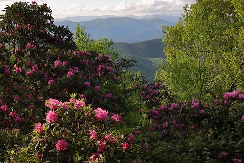 bearwallow westernnorthcarolina catawbarhododendron spring canoneosm6mkii canonefm32f14 landscape