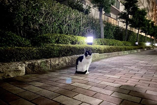 Today's Cat@2020ー06ー29