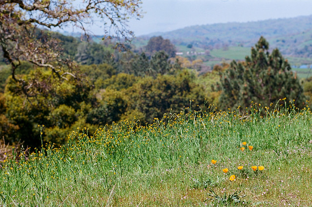 Joseph D. Grant County Park, California
