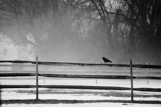 Wooden Fence with Bird and Mist