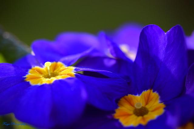 Orange and Blue...