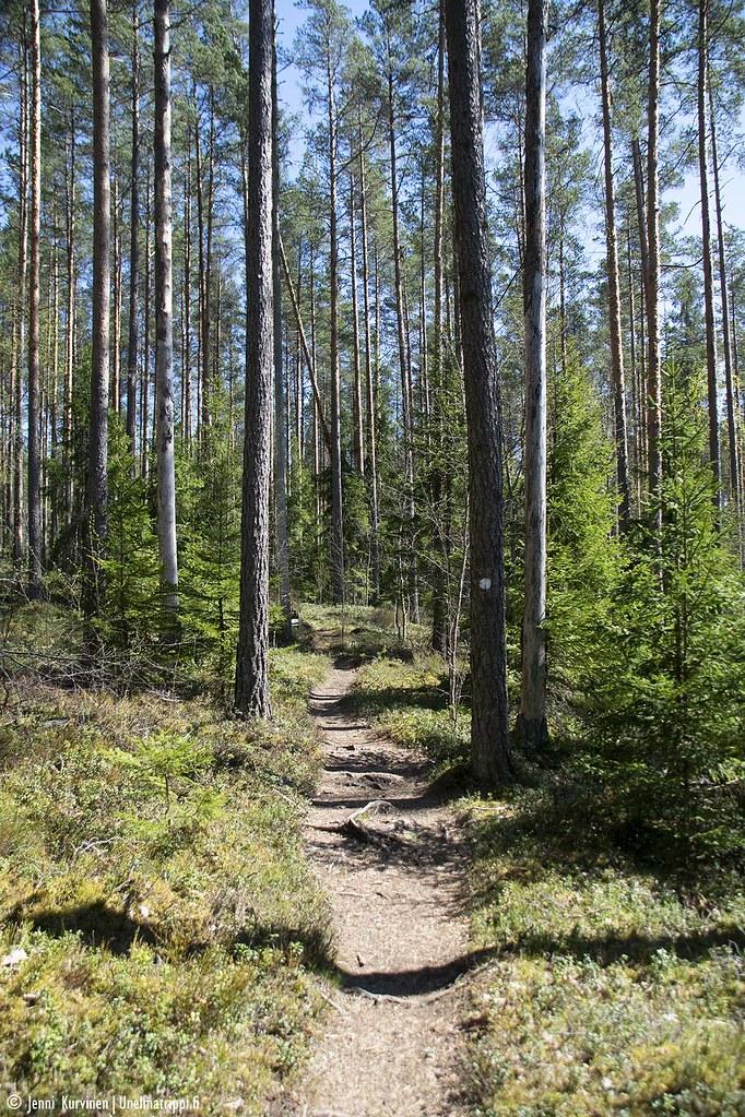 Patikointipolkua Sahajärven rengasreitillä Teijon kansallispuistossa