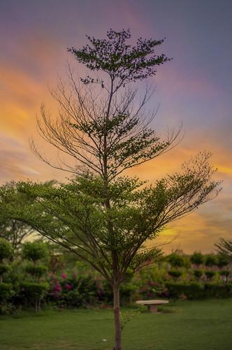 lovely amazing landscapes faisalabad colors nature trees green kaleemshaheedparkfaisalabad