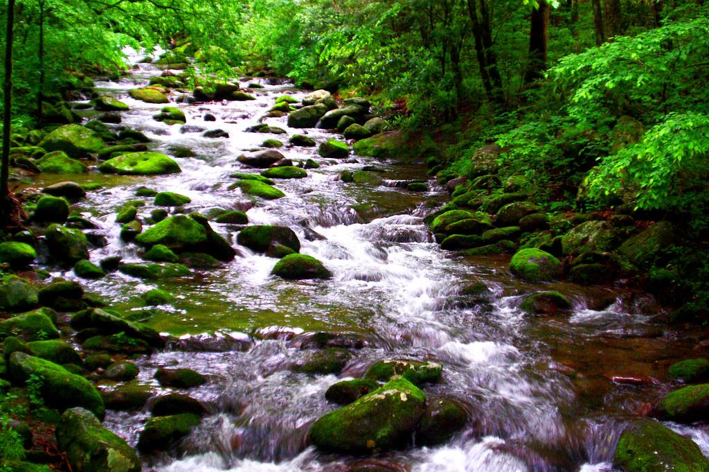 Smoky Mountains Stream (Explored 6/30/20)