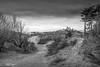 Formby Pinewoods and Beach January 2020