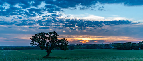 usa june sunset nature wisconsin nikond850 landscape unitedstates waukesha oaktree 2020 unitedstatesofamerica