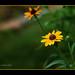 "<p><a href=""https://www.flickr.com/people/petercamyre/"">Peter Camyre</a> posted a photo:</p>  <p><a href=""https://www.flickr.com/photos/petercamyre/50060587513/"" title=""Mellow Yellow""><img src=""https://live.staticflickr.com/65535/50060587513_d7c57f428c_m.jpg"" width=""240"" height=""168"" alt=""Mellow Yellow"" /></a></p>  <p>June 28, 2020</p>"