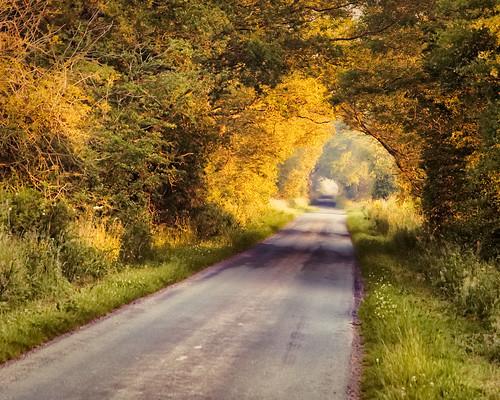 cumbria eden edenvalley mist misty sunrise lowlight orange green trees hills nikon d7500 june2020 summer summer2020 june road tunnel roadtunnel golden goldenhour treetunnel