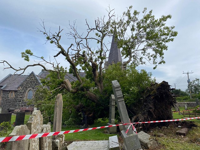 The area around the Spanish Chestnut tree is cordoned off for heath and safety reasons.