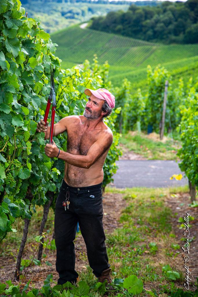 Working the wineyard!