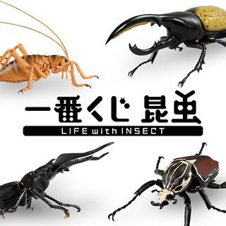 超人氣蟲蟲夏日襲來!一番賞「昆蟲 LIFE with INSECT」原尺寸擬真登場(一番くじ 昆虫 LIFE with INSECT)