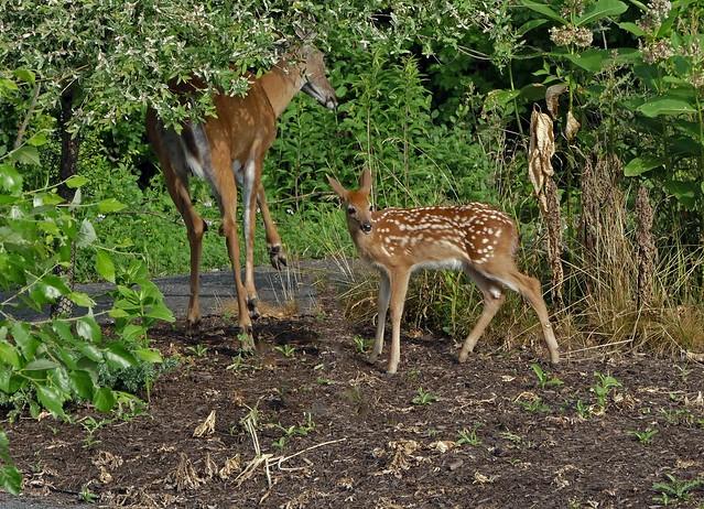 Family Breakfast In The Garden