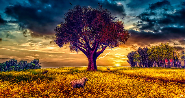 Fields Of Gold ....