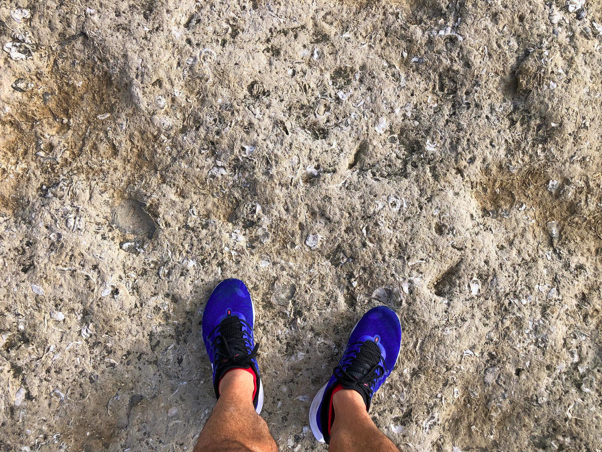 Costa Jurásica de Inglaterra - Thewotme costa jurásica - 50061934201 cd504e470f k - Costa Jurásica de Inglaterra, un viaje de millones de años