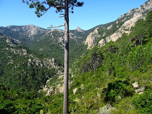 Bocca di Ricu : vue de la vallée du Finicione vers l'amont et du Castedducciu