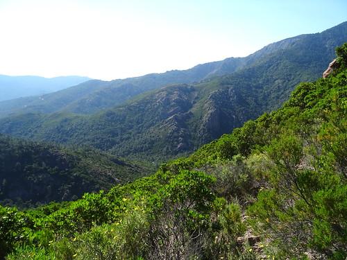 Dans le versant Est de Bocca di Ricu : vers la vallée du Finicione