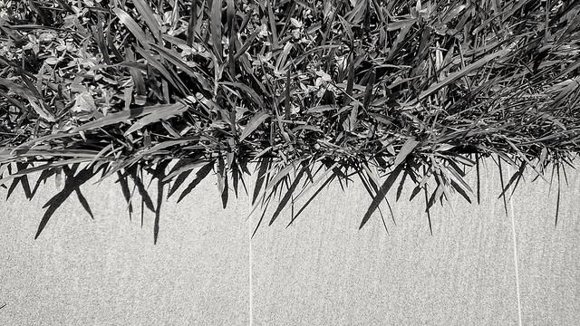 182/366: overgrowth (phone photography)