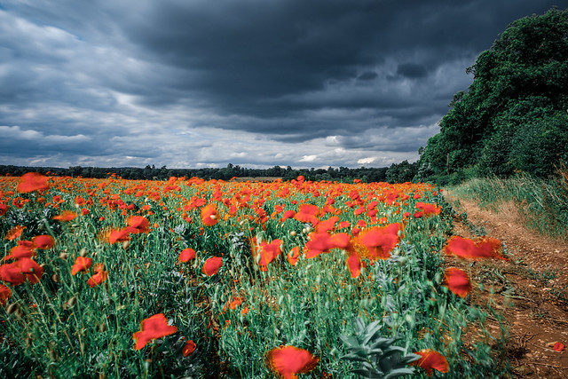 Through The Dancing Poppies Stole A Breeze, Most Softly Lulling To My Soul.....(Crazy Tuesday! - Clouds - Explored 01/07/2020)