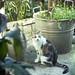 Un nuovo gatto in paese