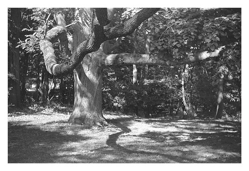 blackandwhite crossprossed landscape trees kodakgold argusc3 kodakgc200 ishootfilm durandeastmanpark shootfilmstaypoor rangefinder yogainthepark